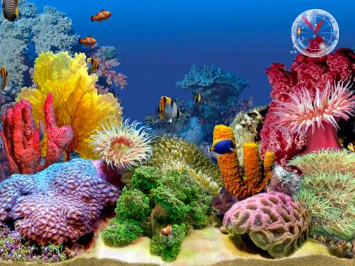 Free Screen Savers Aquarium II Screen Saver