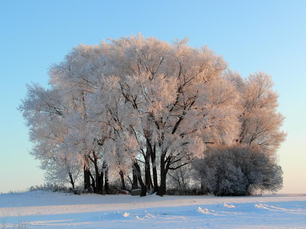 frosty morning wallpaper - photo #4