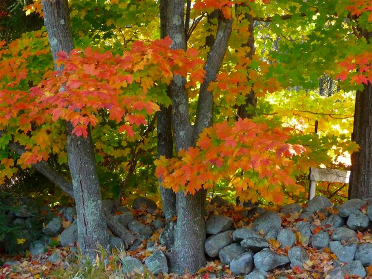 Cloudeight free desktop wallpaper - Pics of fall scenes ...