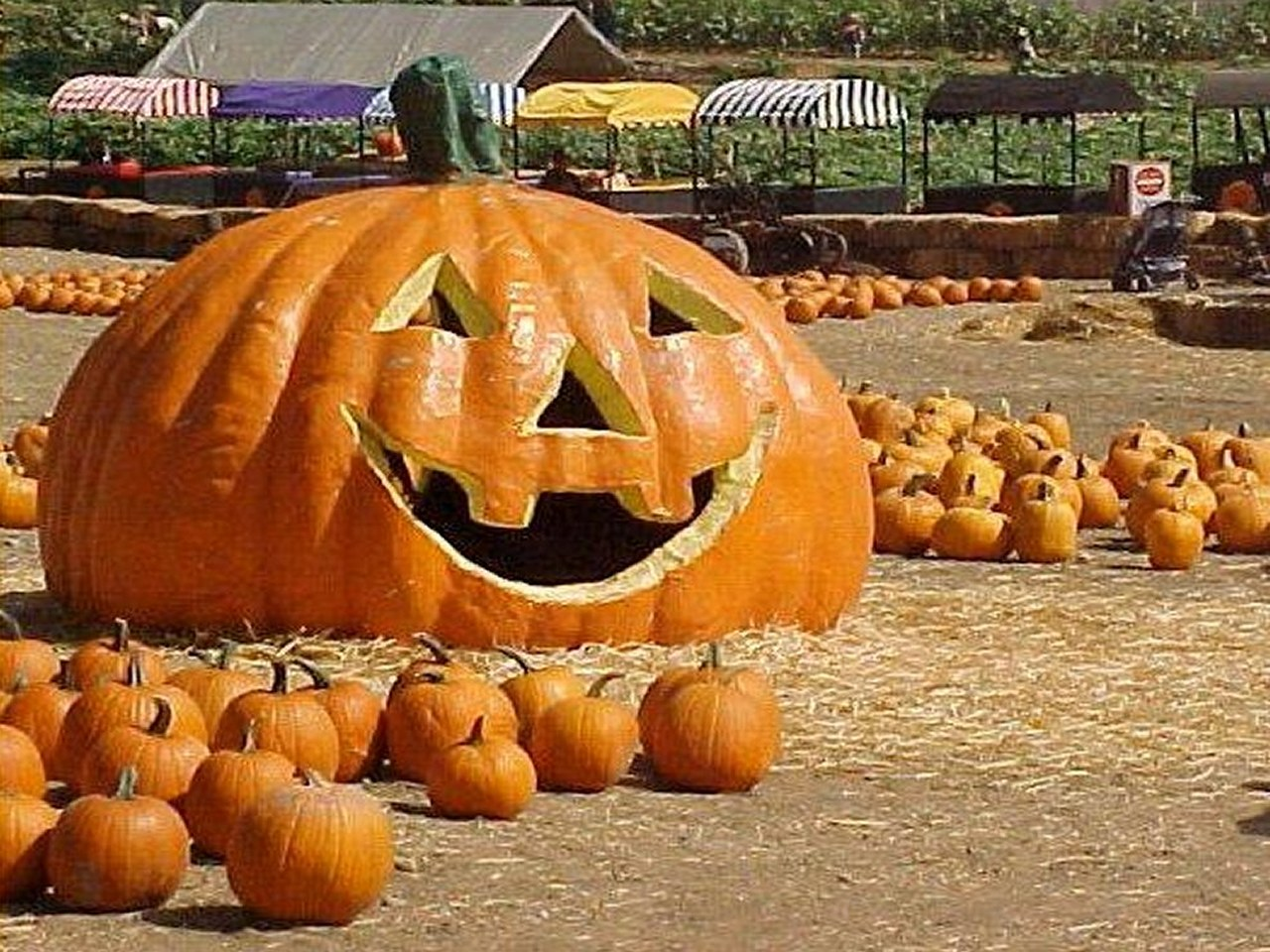 100 Amazing Pumpkin Carvings