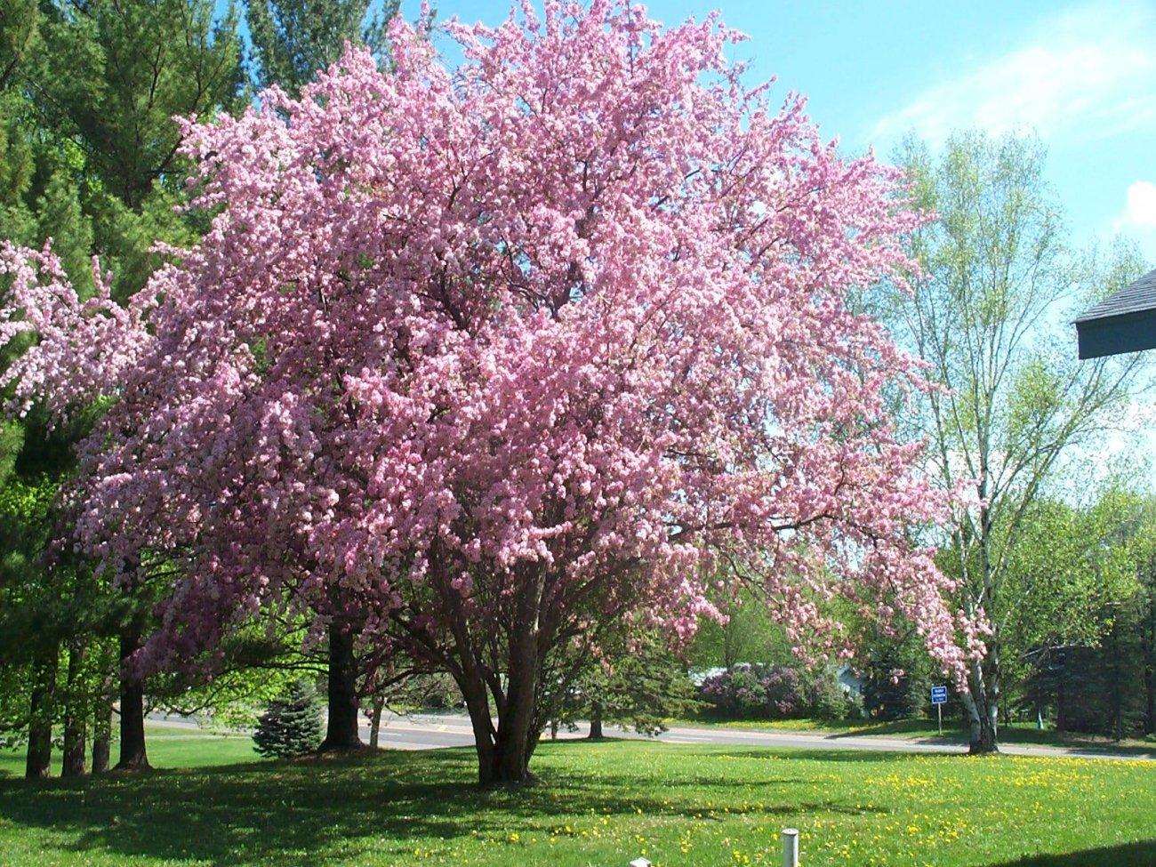 Flowering Tree Beautiful Flowers